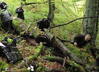 Studying bryophytes and fungi on a beech log